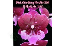 Phal. Chia-Shing Hot Kiss '256'